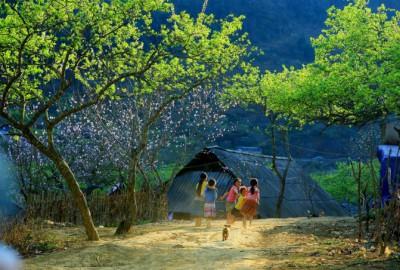 Kinh nghiệm du lịch Mộc Châu mùa xuân
