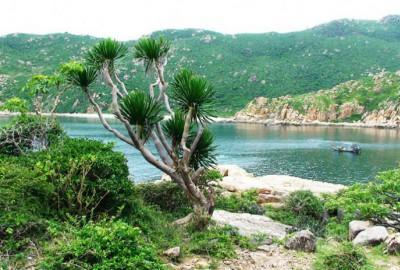 Kinh nghiệm du lịch vườn quốc gia Núi Chúa – điểm đến hấp dẫn tại Ninh Thuận